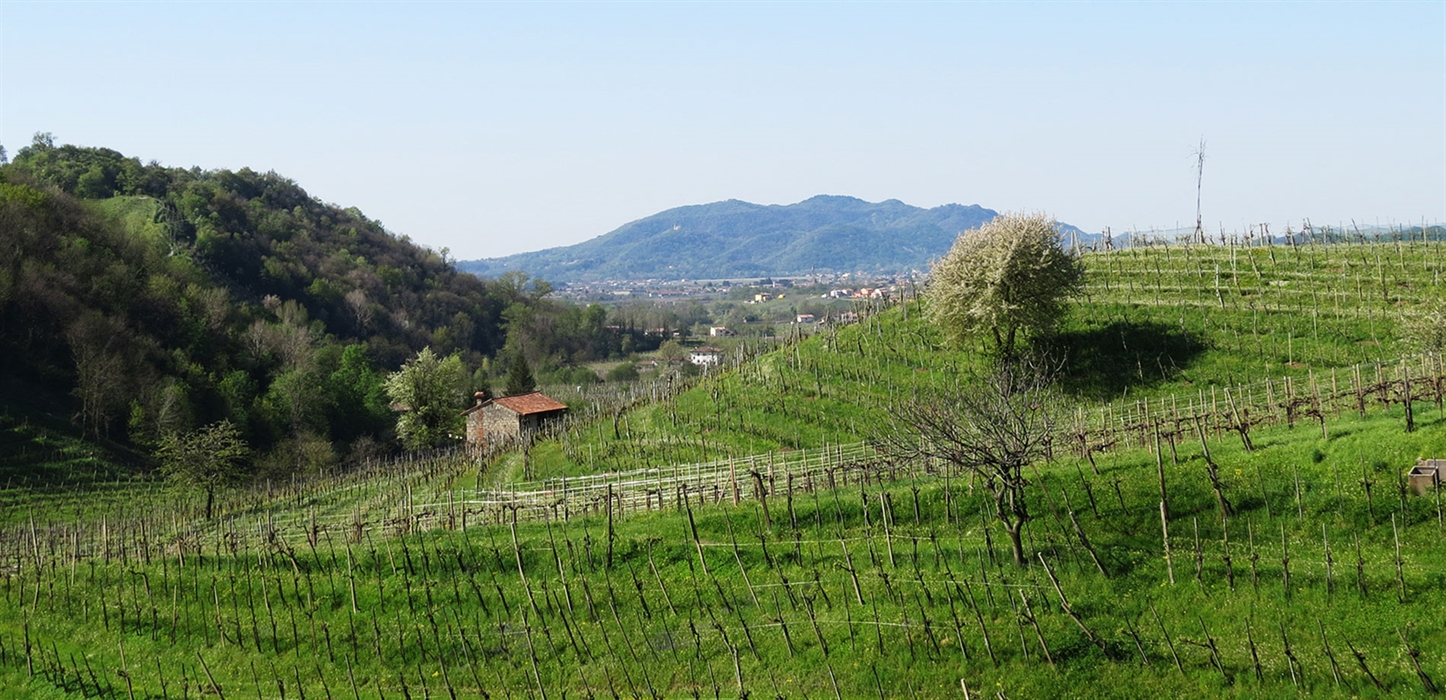 Casa Coste Piane vineyards